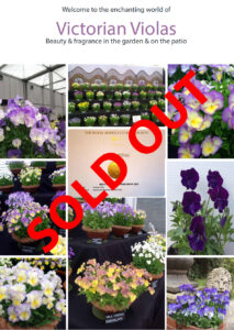 Viola Brochure Sold Out